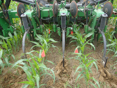 High-residue cultivation in a corn field with hairy vetch/triticale cover crop residue