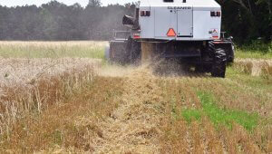 Preparing Chaff lines at a Virginian farm for future management. Photo credit: Claudio Rubione