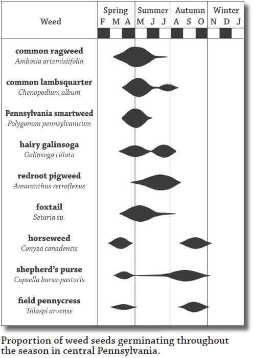 Seed germination chart